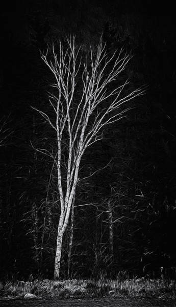 Life's A Birch No.2 Poster