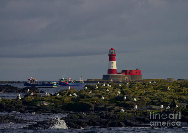 Lighthouse On The Farne Isands Northumberland Poster