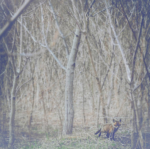 Little Fox In The Woods 2 Poster