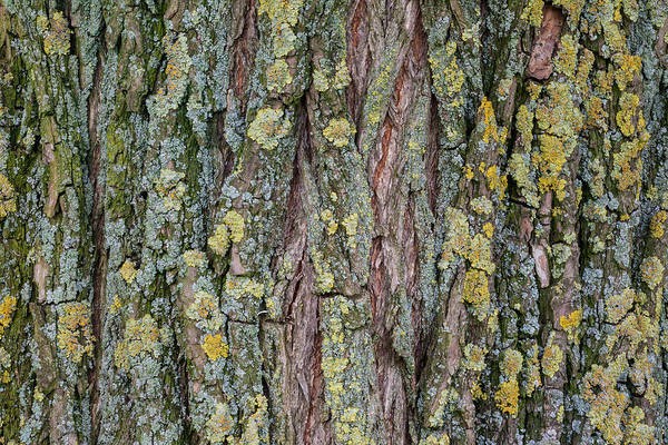 Living Tree Poster