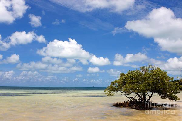 Lone Mangrove Tree Florida Keys Poster