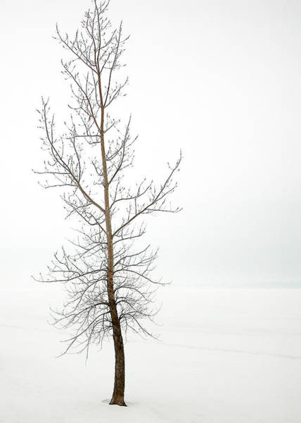 Lone Tree On The Ottawa River Shoreline Poster
