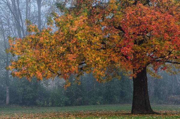 Poster featuring the photograph Longing For Autumn by Darlene Bushue