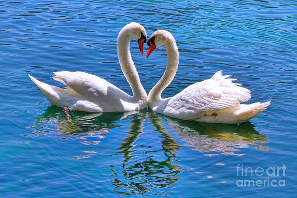 Love For Lauren On Lake Eola By Diana Sainz Poster