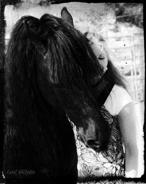Love Of A Friesian Poster