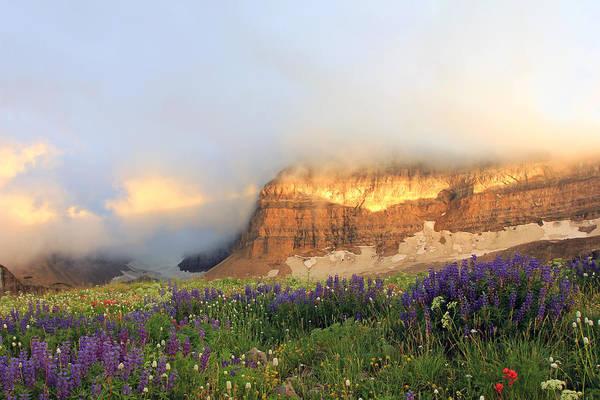 Lupine Wildflowers On Mount Timpanogos Poster