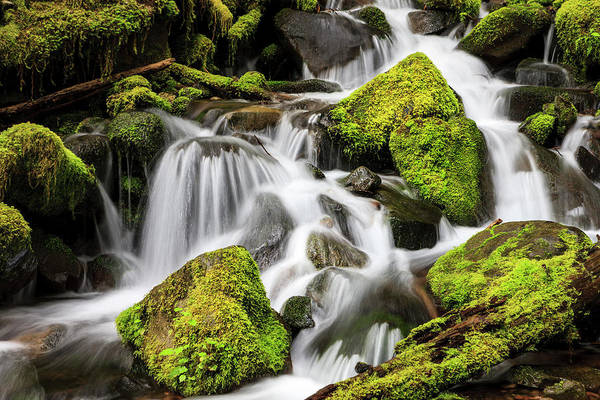 Lush Waterfall Olympic National Park Poster