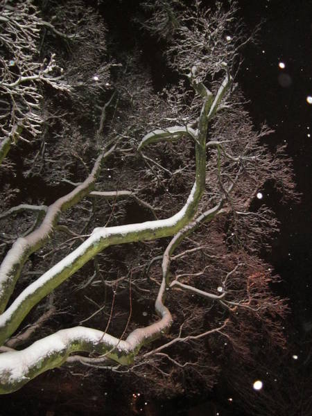 Magic Tree Poster