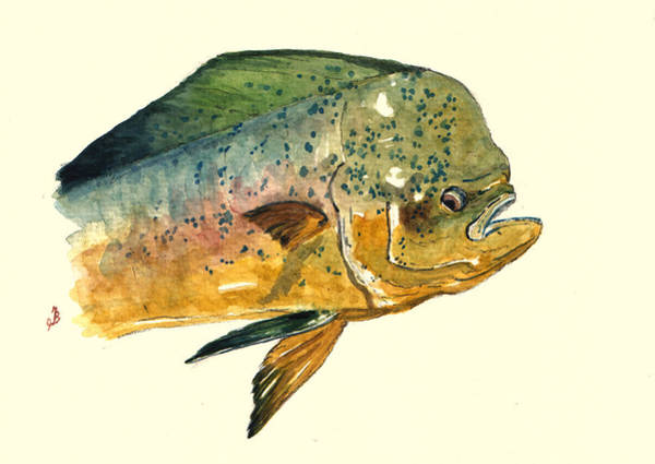 Mahi Mahi Fish Poster