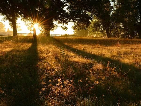 Majestic Oaks Sunrise Poster