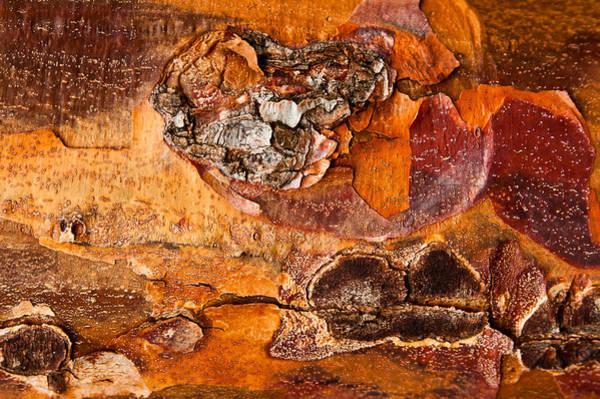 Maple Tree Bark Poster