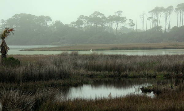 Marsh View At Ocean Course Poster