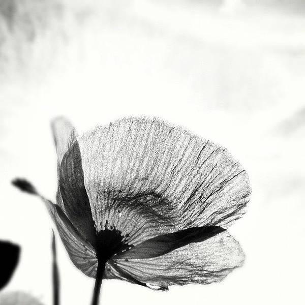 #mgmarts #poppy #summer #spring #sunny Poster