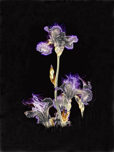 Midnight Iris Poster