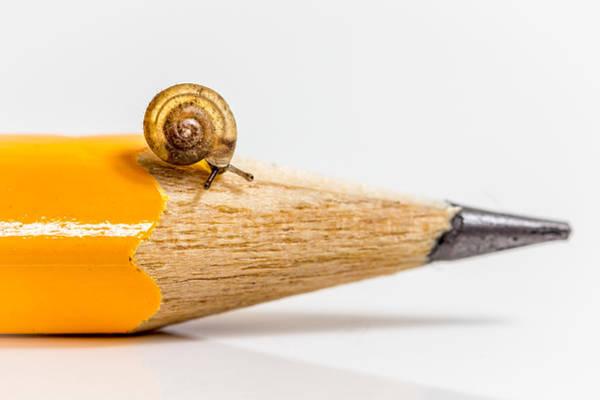 Mini Snail. Poster