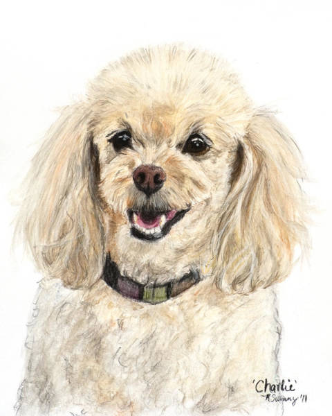 Miniature Poodle Painting Champagne Poster