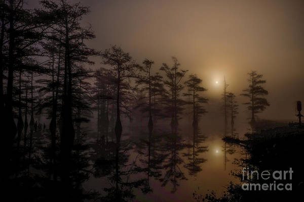 Mississippi Foggy Delta Swamp At Sunrise Poster