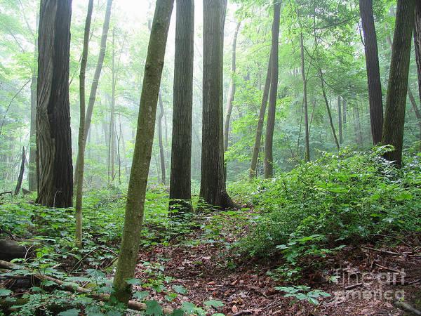 Misty Deep Forest Poster