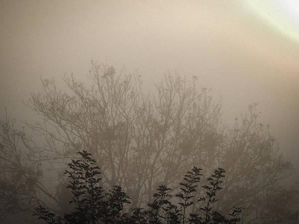 Misty Morning Poster
