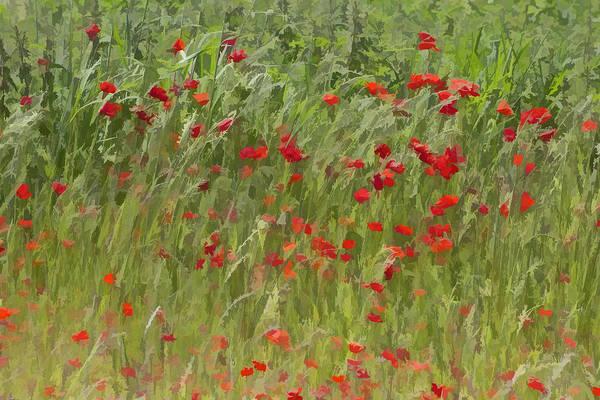 Monet Poppies IIi Poster
