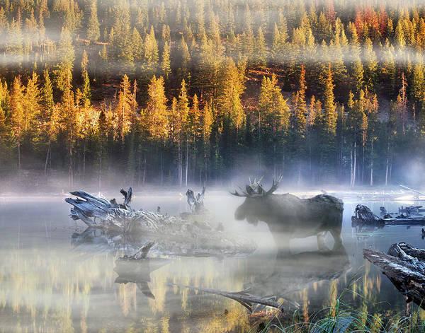 Moose Lake Poster