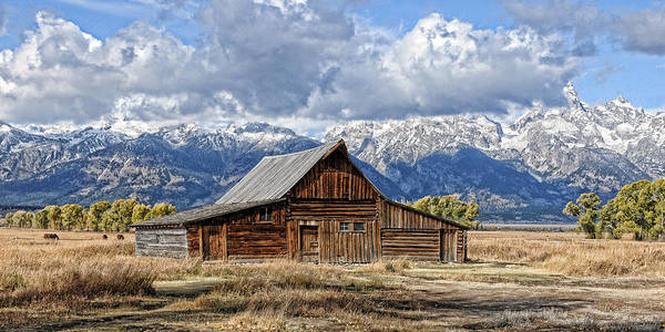 Mormon Barn With Horses Poster