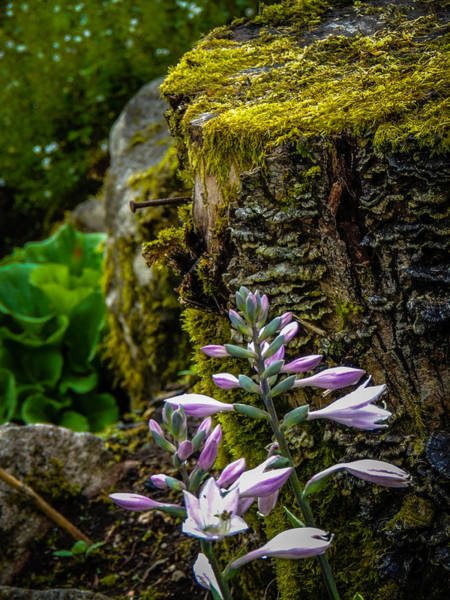 Moss And Flowers In Markree Castle Gardens Poster