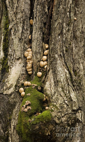 Moss-shrooms On A Tree Poster