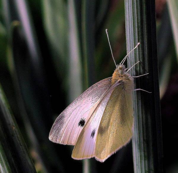 Moth In Light Poster
