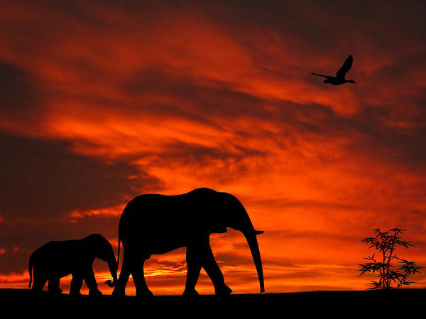 Mother And Baby Elephants Sunset Silhouette Series Poster