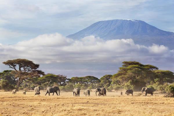 Mount Kilimanjaro Amboseli  Poster