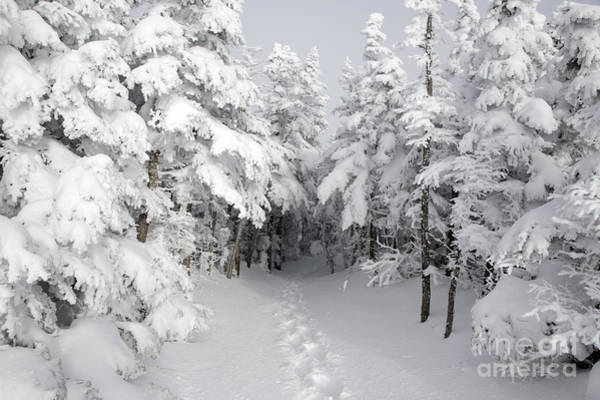 Mount Osceola Trail - White Mountains New Hampshire Poster