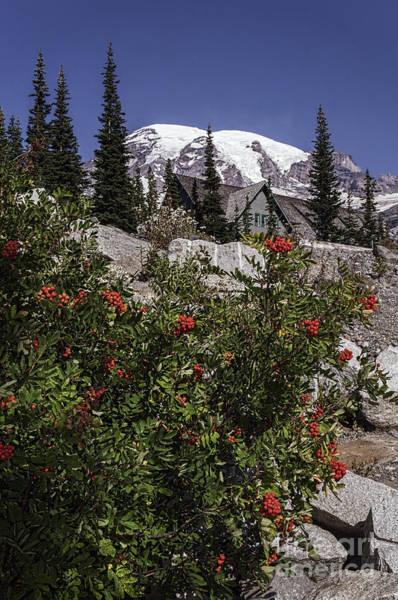 Mt Ash At Mt Rainier Poster