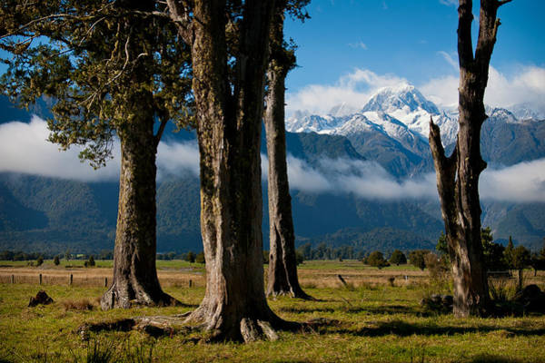 Mt Cook Through Trees Poster
