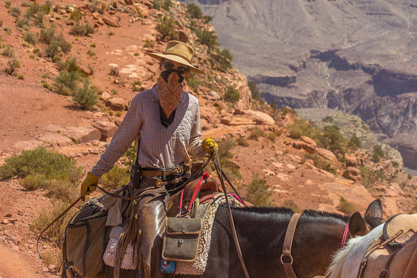 Mule Wrangler On The South Kaibab Trail Poster