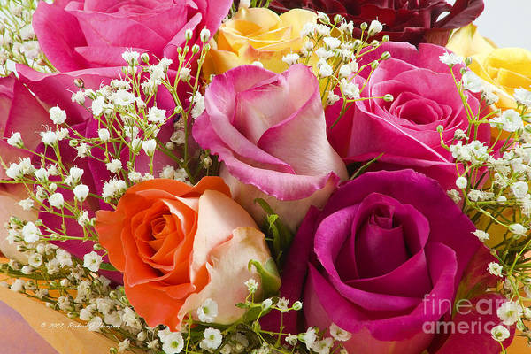 Multiple Roses Arrangement Poster