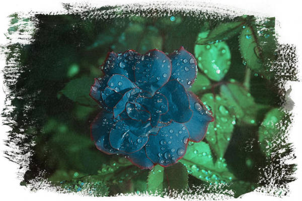 My Blue Rose Poster