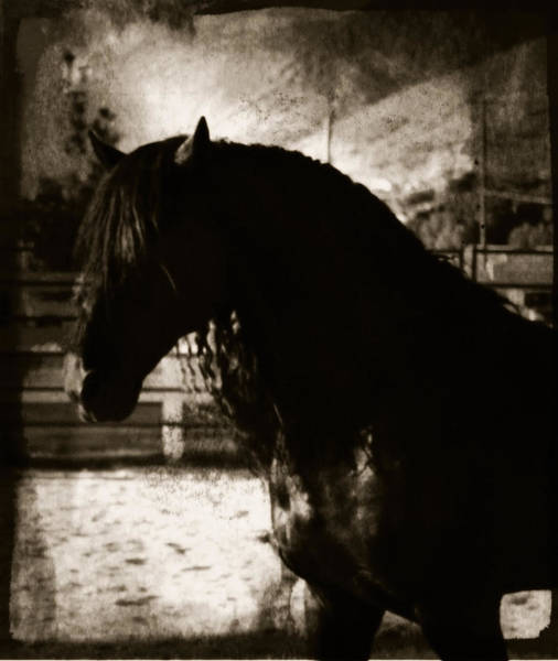 Mystical Friesian Poster