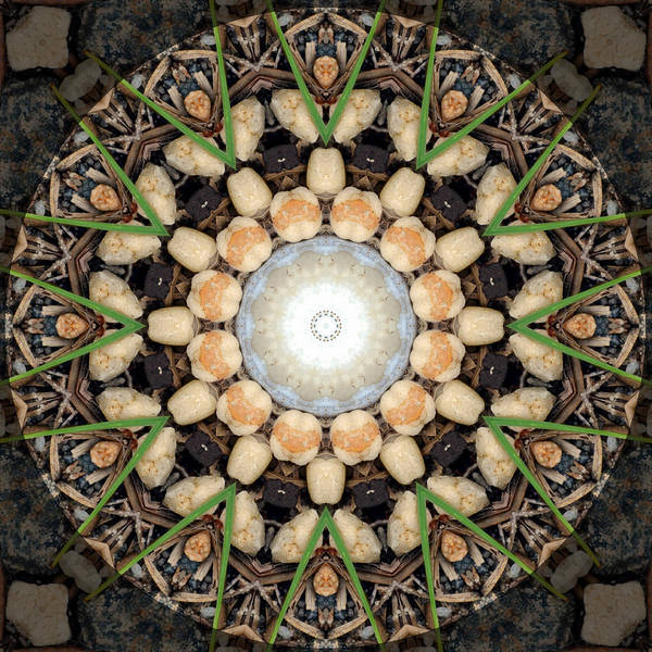 Nature Vortex Mandala #1 Poster