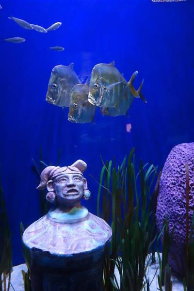 New Orleans Aquarium Poster