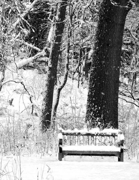 Nichols Arboretum Poster