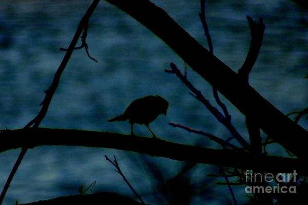 Night Bird Poster