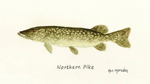 Northern Pike Poster