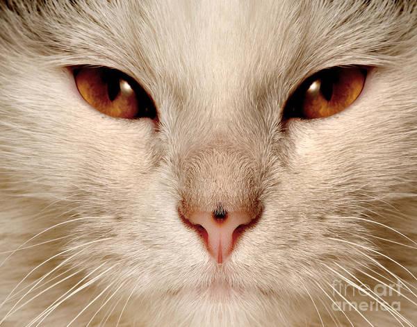 Obi The Cat Poster