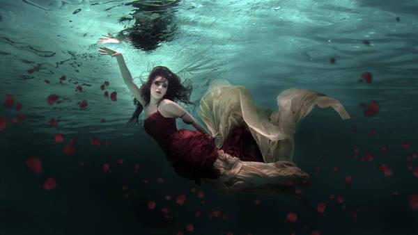 Ocean Of Roses Poster