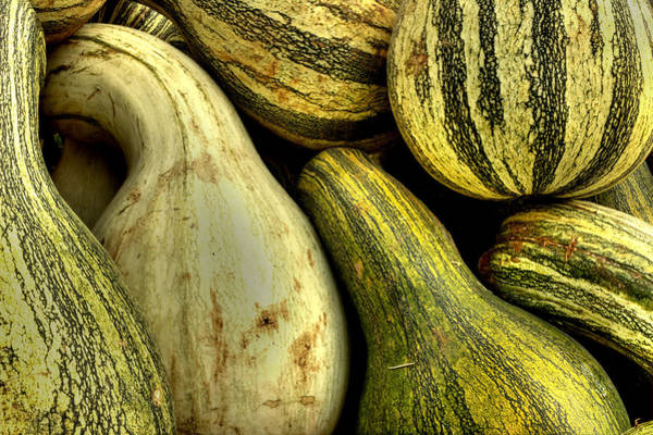 October Gourds Poster