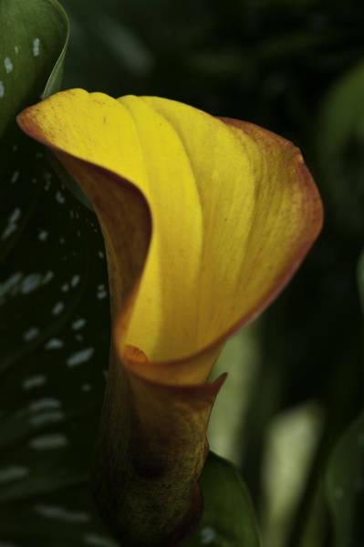 Orange Blooms Poster