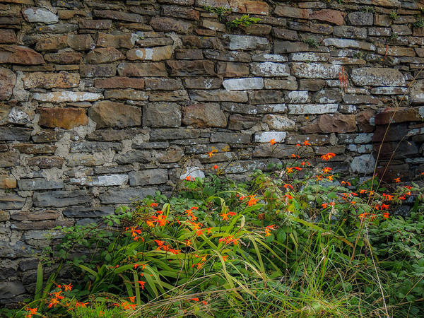 Orange Wildflowers Against Stone Wall Poster