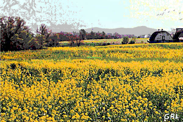 Poster featuring the painting Original Fine Art Digital Fields Yellow Flowers Maryland by G Linsenmayer