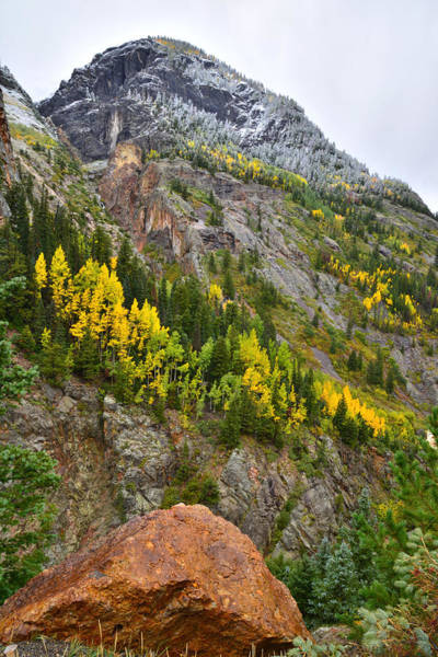 Ouray Canyon Fall Color Poster